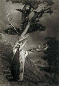 The Dying Cedar, 1906, by Anne Brigman (1869 - 1950).