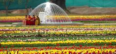 """Phool Dehi ""Or Festival Of Flowers - http://thehawkindia.com/news/phool-dehi-or-festival-of-flowers/"
