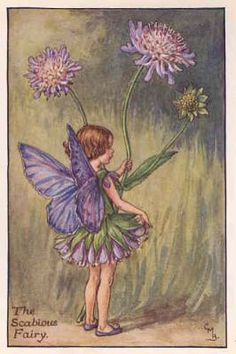 FLOWER FAIRIES 1940's: SCABIOUS. Old Cicely Barker Print. By Cicely Mary Barker