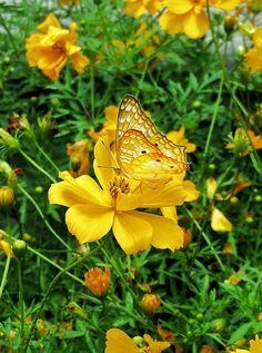 Most Beautiful Butterfly, Float Like A Butterfly, Beautiful Bugs, Amazing Nature, Animals Beautiful, Butterfly Dragon, Butterfly Art, My Beauty, Wild Animals