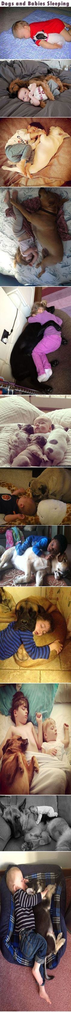 Dogs and Babies Sleeping cute babies animals dogs kids baby adorable dog puppy animal pets funny animals funny pets heart warming funny dogs