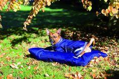 Cork Farm has just published:  Horseware AMIGO W.... Visit: http://www.corkfarmequestrian.co.uk/products/horseware-amigo-waterproof-dog-bed-600g-cushion-pillow-fibre-fill-s-m-l?utm_campaign=social_autopilot&utm_source=pin&utm_medium=pin