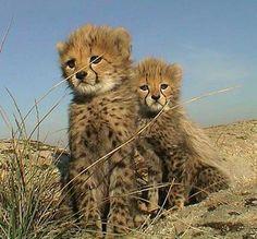Passion Animale, blog créé en 2009 par Delphina, passionnée par le monde animal et par la protection de la faune. Son but : informer au sujet des animaux et de la biodiversité. Plus de 900 articles en ligne, avec de l'actualité, mais aussi des quiz, des sondages, des...