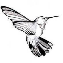 Hummingbird (by Rachel Clare Price)