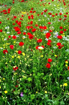 Wild flowers Spring in Greece