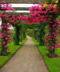 Beautiful walkway or driveway