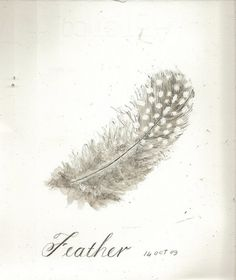 Love feathers also, and really like the softness of this whole image/logo
