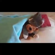 I love my Teddy Bear!! #Cats FOLLOW and Revine for more Animal Vines!!
