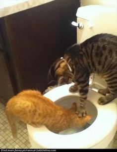 cats are  mean, laughed out loud at this one