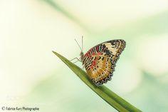 Butterfly by FabriceKtz