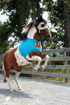 Does your horse need a Halloween costume? It's super-pony!