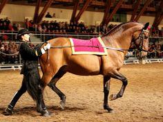 #Laurence Sautet et #Ralo*ENE-HN, Lusitanien offert par l'Ecole Royale Andalouse d'Art Equestre