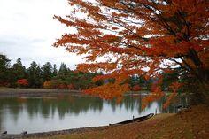 平泉 毛越寺。ここの紅葉はいつも美しい。