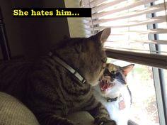 My poor cat has it rough. - Imgur