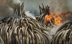 Kenya's president ordered the destruction with the aim of sending a message to the world that the trade in ivory must be stopped