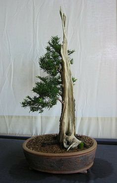 Greater Hartford Bonsai Society show - 2
