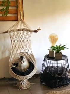 Why choose the practical side of a cat basket by leaving the aesthetic side ? Chat Crochet, Crochet Diy, Diy Cat Hammock, Cat Basket, Cat Room, Macrame Projects, Macrame Patterns, Cat Furniture, Pet Beds