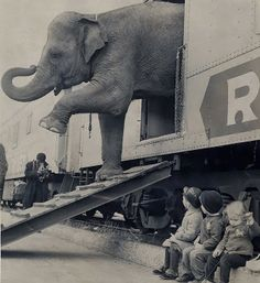 Reminds me of Water For Elephants. [Best Foot Forward by Paul Rice] Targa, an elephant from the Ringling Bros. Barnum and Bailey Circus, steps off the circus train.