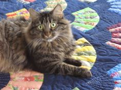 ❤ =^..^= ❤  My Quilt Diary: Cats