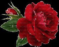 "Szukaj ""rose"" o PicMix Water Reflections, Gifs, Red Roses, Garden Design, Aishwarya Rai, Smileys, Plants, Animation, Paintings"
