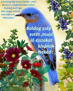 Good Night, Bird, Animals, Nighty Night, Animales, Animaux, Birds, Animal, Animais