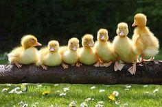 ....família unida