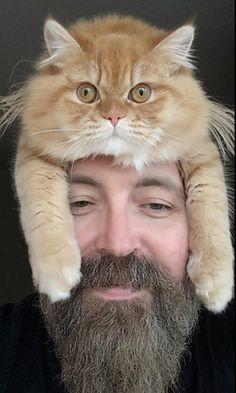 Ezek a macskák kalapnak képzelik magukat – fotók  http://www.nlcafe.hu/szabadido/20150512/macska-kalap-fotok/