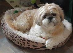 Can i have a bigger bed mum
