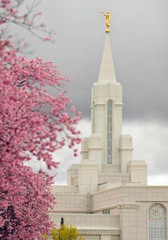 Bountiful Temple. Spring