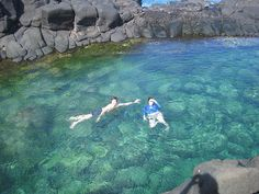 Salt water pool with fish