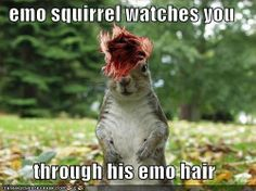 EMO SQUIRREL