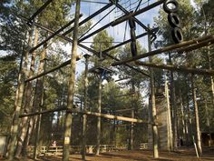 Action Challenge at Sherwood Forest
