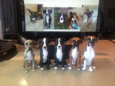 Custom sculpted dogs to be toppers of fie wedding cakes!  www.laurievalko.com