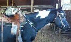 War Drums Black Fire and mommy dearest War Drums, Black Fire, Horses, Animals, Animales, Animaux, Animal, Horse, Animais