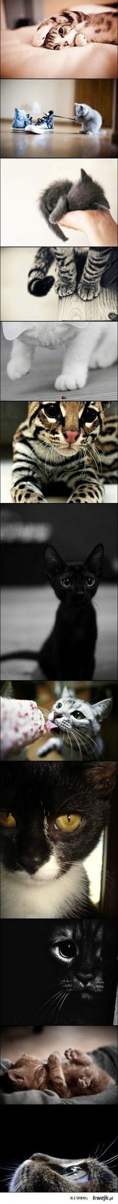 Oh so cute kitties!!