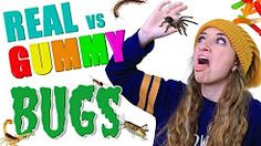 Ever eaten a bug? We ate several of them, including tarantula, scorpion, and centipede in today's newest challenge video. a REAL FOOD vs Gummy Food BUG C. Brooklyn And Bailey Youtube, Funny Pranks, Famous Faces, Tween, Easy Hairstyles, Bullying, Youtubers, Ronald Mcdonald, Challenges