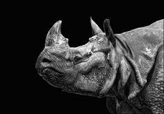 Rinoceronte, by Sonja Probst Rhino Art, Animal Sculptures, Art Model, Creature Design, Natural World, Wildlife Photography, Figurative Art, Logo Inspiration, Animals And Pets
