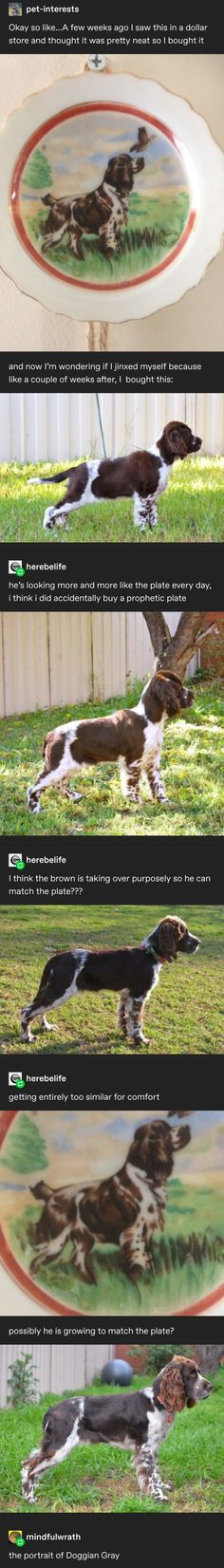 27 Animals That Start With M in The World [Pictures of Animals] Animal Memes, Funny Animals, Cute Animals, Tumblr Funny, Funny Memes, Hilarious, Comedy, Tumblr Posts, Funny Posts