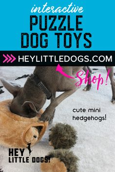 busy dog ideas,how to make dog toys easy,backyard fun for dogs Cute Dog Toys, Small Dog Toys, Best Dog Toys, Best Dogs, Stimulating Dog Toys, Outdoor Dog Toys, Tough Dog Toys, Durable Dog Toys, Interactive Dog Toys
