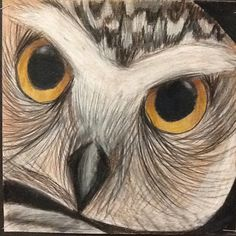 I gave students 4 pictures of owls printed on a single sheet of paper in black and white. We made 3x3 inch view finders with construction p...