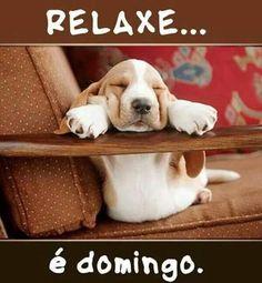 BOM DOMINGO! <3 #petmeupet #cachorro #domingo #gato #amoanimais