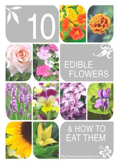 A list of edible flowers your kids can pick and eat. This edible flowers list includes 10 easy to grow flowers and tips on how to eat them. Edible Plants, Edible Garden, List Of Edible Flowers, Flower Food, Wild Edibles, Garden Projects, Garden Inspiration, Gardening Tips, Herb Garden