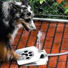 Doggy Fountain - easy to use by your dog water fountain. Keeps your dog hydrated on hot summer days.