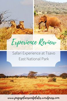 Safari Experience at Tsavo East National Park, Kenya Best Places To Travel, Cool Places To Visit, Places To Go, Family Holiday Destinations, Amazing Destinations, Travel Destinations, Email Subject Lines, Student Travel, Going On Holiday