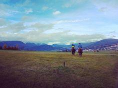Non solo trekking! #chiusoperferie #falchettoactive #horses #ariaaperta #montagna. #montagnadavivere #trentinodavivere #valdinon