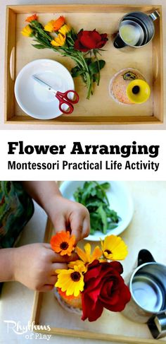 Montessori practical life activities are designed to help children develop logical thought and independence. Each step of this flower arranging Montessori practical life activity for kids (picking flowers, pouring water, cutting flowers, arranging flowers Montessori Trays, Montessori Homeschool, Montessori Practical Life, Montessori Classroom, Maria Montessori, Montessori Toddler, Montessori Materials, Montessori Activities, Online Homeschooling