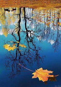 REflection naturefacebook.com Beautiful reflection of autumn — withMarian Ampudia,Shirley Jaro Hernandez,Lavdie Mato,Nancy Parker,C...