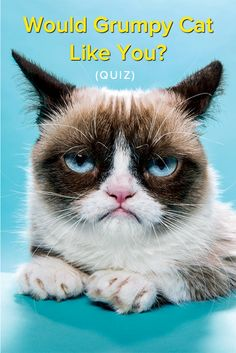 Would Grumpy Cat Like You? Do you think you're a cat whisperer? Think you have a way with the kitties? Well not until you've encountered Grumpy Cat! Find out if you'd even have a chance being friends with this frowning feline. I suppose.....NO! ;)