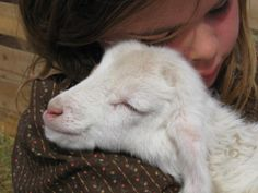 Be kind to all animals big and small cute or not Cabras Animal, Animal Hugs, Beautiful Creatures, Animals Beautiful, Farm Animals, Cute Animals, Sheep And Lamb, Cat Dog, Animal Kingdom