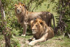 Salas's Camp - Wildlife (2)